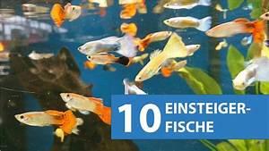 Aquarium Fische Süßwasser Liste : 10 aquarium fische f r anf nger youtube ~ A.2002-acura-tl-radio.info Haus und Dekorationen