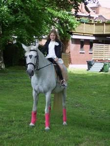 Friese Paarden Voor Ceremonievervoer