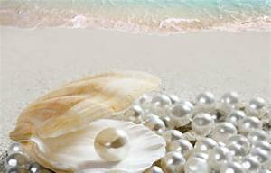 Wallpaper shell, beach, beach, sea, sand, sea, sand, shore ...