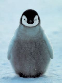pinguin wallpaper