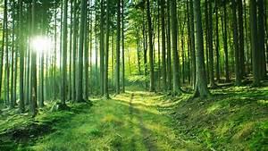 Bilder Vom Wald : der wald kleine waldgeschichte wissen themen ~ Yasmunasinghe.com Haus und Dekorationen