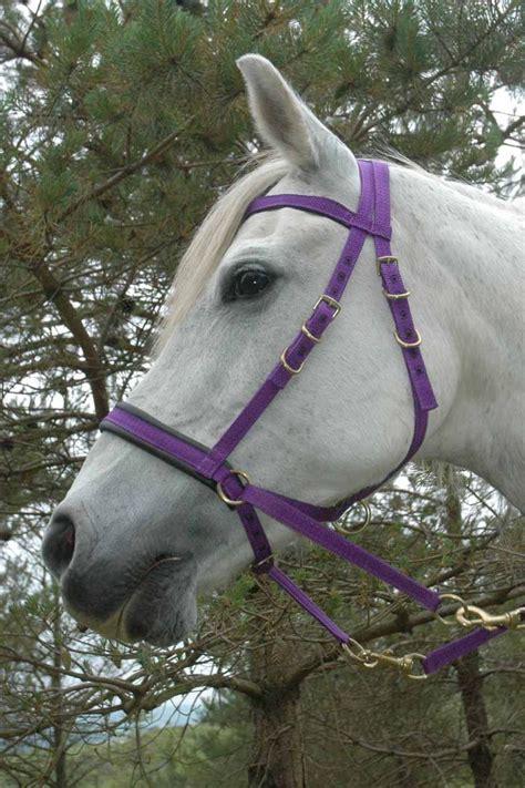 bridle bitless horse bridles horses spirit finally found natural hackamore names english visit