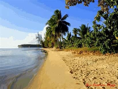 Plage Mer Cocotier Gifs Patron Vacances Location