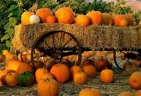 Pumpkin Patch Dallas Texas by Beauty Guide 101 Sunday Social Fall Season