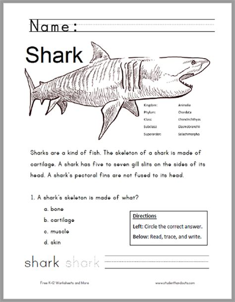 Free Printable Shark Worksheet For Grades 13