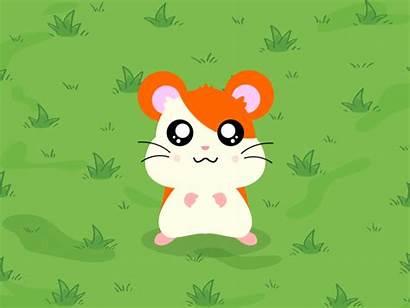 Hamster Animated Animation Cartoon Follow Hamtaro Dribbble