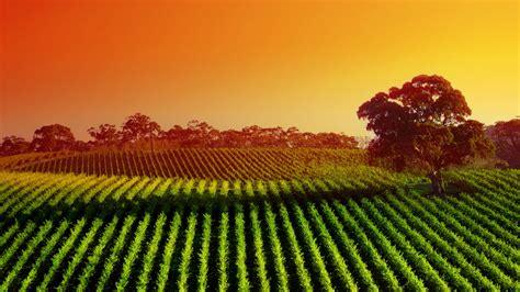 widescreen hdq wallpapers  vineyard  windows