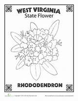 Mountaineer Worksheets Rhododendron sketch template