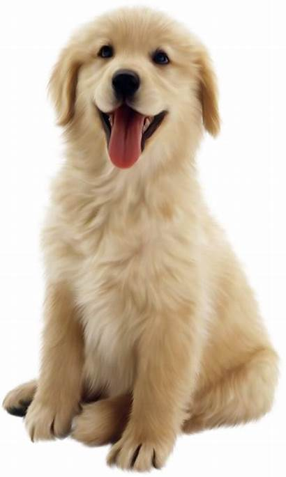 Dog Transparent Puppy Pet Cottonwood Parent Thanks