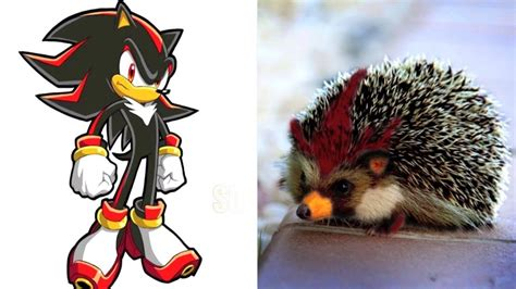 Sonic Boom Characters In Real Life All Characters