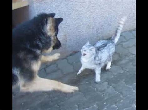 hund kaempft gegen katze die katze schlaegt zurueck cat