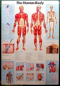 A Great Anatomy Of The Human Body Infographic Poster