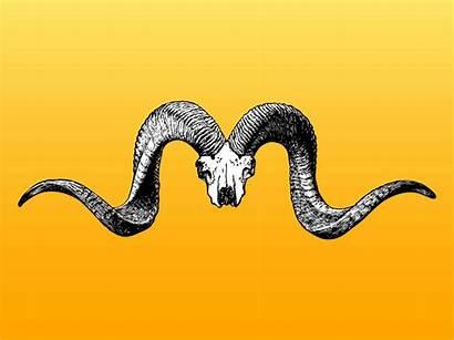 Horns Skull Graphics Vector Mouflon Freevector