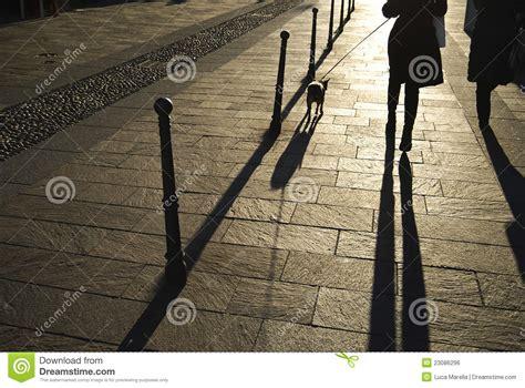 walk  dog   sunset royalty  stock image