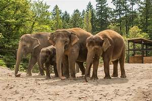 Elephantastic: A look inside the Oregon Zoo's new stomping ...