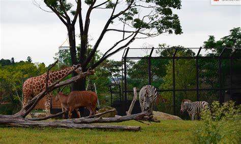 japan yokohama zoo african savanna tokyo living bestlivingjapan