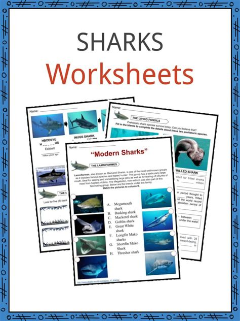 shark facts worksheets information  kids