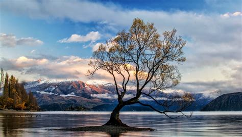 Wanaka Tree 5k Retina Ultra Hd Wallpaper And Background Otterbox Iphone 6 Plus Wallpapers How To Turn Off Vibrate On 5 Battery Replacement Ebay Ringtones Chargers Customize Your