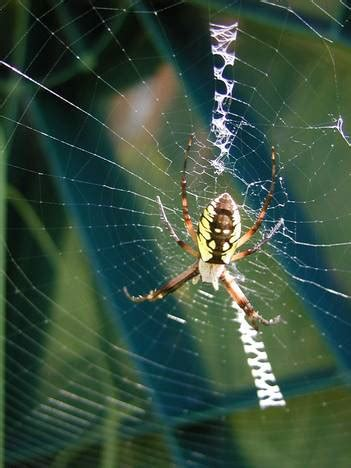 comment les araign 233 es tissent elles leur toile
