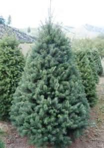 Douglas Fir Artificial Christmas Tree by Bear Canyon Tree Farm Douglas Fir Christmas Trees