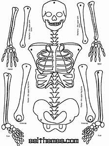 MAKE A PAPER SKELETON to label bones | school | Pinterest ...