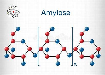 Starch Molecule Amylose Polysaccharide Formula Chemical Structural