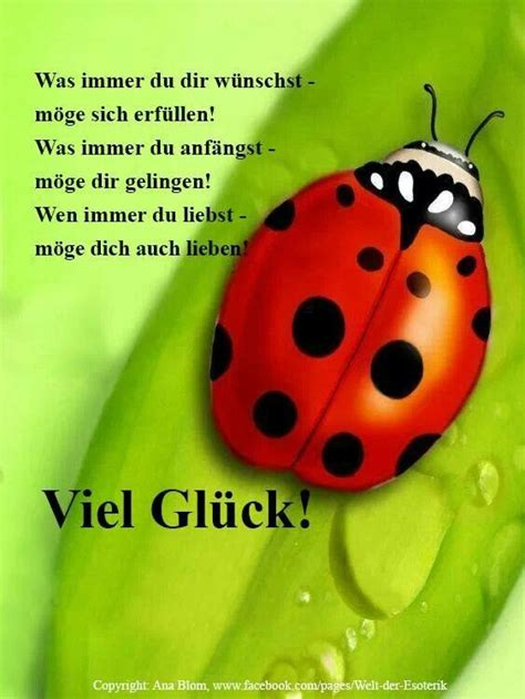 viel glueck sprueche pinterest happy birthday