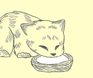 kitten drinking   milk bowl drawception