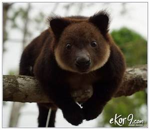 Cokelat Dan Merah Cantik Dengan 10 Contoh Hewan Langka Yang Terancam Punah Di Bumi
