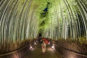 Ultimate 2019 Kyoto  Japan Planning Guide