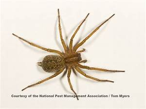 Spider Control: Extermination of Spiders