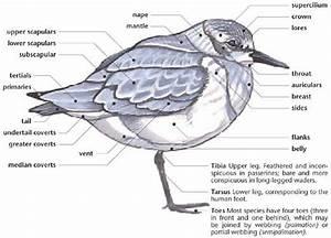 245 Best Bird Labels Images On Pinterest
