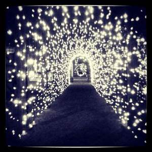 Fairy Light Arch Fairy Light Tunnel Wedding Spot Night Hiking