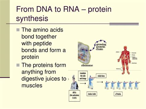 Ppt  Chapter 12 Dna The Molecule Of Heredity Powerpoint. Online Nurse Midwifery Programs. Investment Retirement Plan Stocks And Trades. Hospitals In Midland Mi Vitality Pet Hospital. Is Everest College An Accredited School. How To Help A Depressed Girlfriend. Washington Dc Divorce Attorney. Mayo Clinic Nicotine Dependence Center. Website Hosting Services Vancouver Web Design