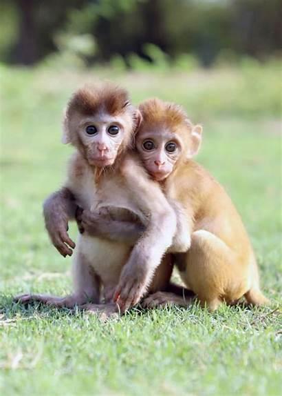 Monkey Adorable Babies Orphaned Animals Mothers Monkeys