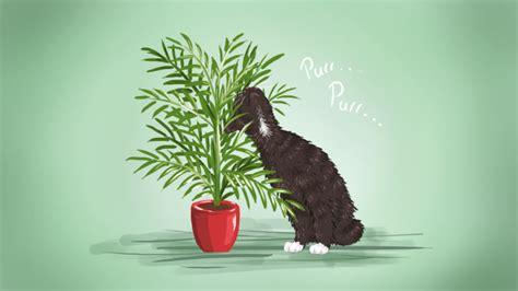 low light indoor plants safe for cats the best low maintenance pet friendly houseplants