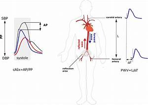 Principles Of Assessment Of Pulse Wave Velocity  Pwv  And