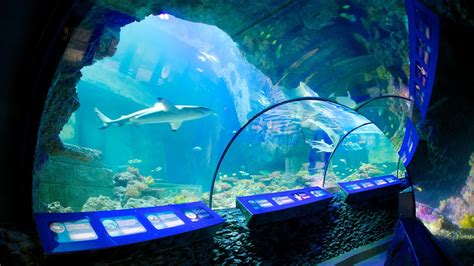 sea aquarium in munich expedia