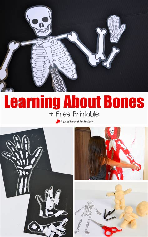 learning about bones activities for and free skeleton 680 | b475e64ad837ef0d555da9a34d8db95f