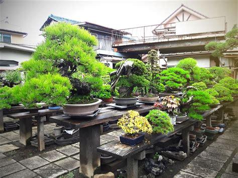 สวนญี่ปุ่นสุดอะเมซิ่ง: หมู่บ้านบอนไซโอมิยะในไซตามะ ญี่ปุ่น