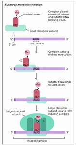 Protein Synthesis Definition