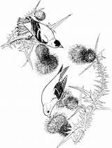 Goldfinch Coloring Bird Supercoloring Colorare Disegno Birds Rododendro Printable Drawing Cardellino Colouring sketch template