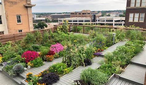 Downtown building offers rooftop garden harvest ...