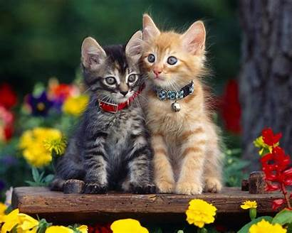 Cats Cat Funny Sitting Multi Kittens Wallpapers