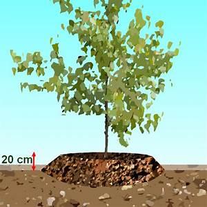 Quel Arbre Planter Près D Une Maison : quel arbre planter dans une terre argileuse ~ Dode.kayakingforconservation.com Idées de Décoration