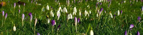 Im Frühjahr by Rasenpflege Im Fr 252 Hjahr Vom Harken Bis Zur Nachsaat