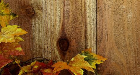wood background pictures free pictures wood fence fall leaves background free stock photo