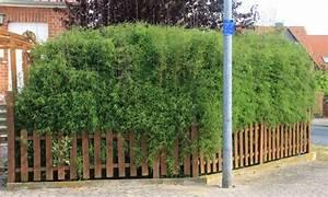 Sichtschutz Terrasse Bambus : sichtschutz mit bambus einfach sichtschutz terrasse sichtschutz garten guenstig ~ Markanthonyermac.com Haus und Dekorationen