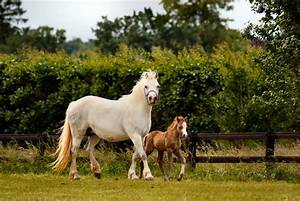 Panoramio - Photo of Mother Horse with Foal.