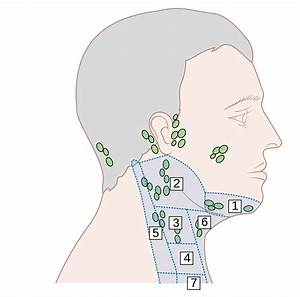 File Diagram Showing The Areas Of Lymph Nodes In The Head